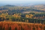 Church of England boosts forestry stake | Timberland Investment | Scoop.it