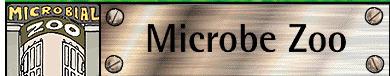 DLC-ME | The Microbe Zoo | BMS: ScienceScoop | Scoop.it
