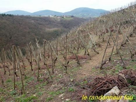 Le randonneur fou: Condrieu et ses vignobles | oenologie en pays viennois | Scoop.it