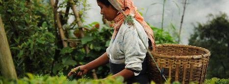 The Tea Basket | Tea Gardens of Assam | Famous Assam Tea Garden Tours | Domestic North East India Tours | Scoop.it