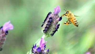 Les pesticides perturbent le cerveau des abeilles | Toxique, soyons vigilant ! | Scoop.it