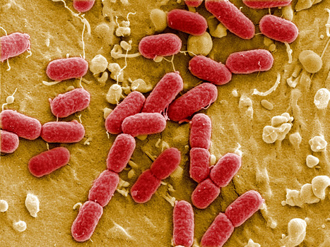 BBSRC involvement: UK research councils join forces in 'unprecedented move' to tackle rise of antibiotic-resistant 'superbugs' | BIOSCIENCE NEWS | Scoop.it