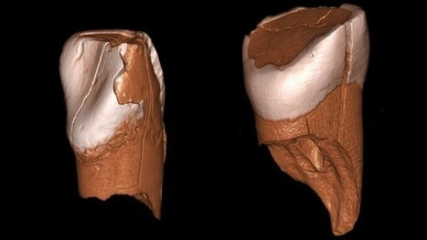Sophisticated tools may have spelled doom for Neandertals | Jeff Morris | Scoop.it