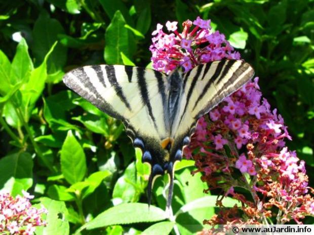 39 am nagement ext rieur 39 in la revue de technitoit - Comment attirer les papillons dans son jardin ...