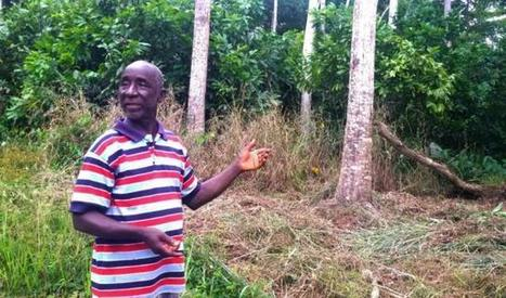 Mapping Ghana's potential for forest restoration - Global Landscapes Forum | Confidences Canopéennes | Scoop.it