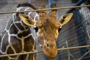 Should animals have legal rights? | Nature Animals humankind | Scoop.it