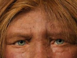 Neanderthal-human sex bred light skins and infertility - life - 29 January 2014 - New Scientist | Bioslogos | Scoop.it