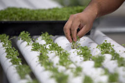 Nevada seeing green in indoor farming; visionaries hope state can supply own culinary capital   Daily Reporter (Greenfield, IN)   CALS in the News   Scoop.it
