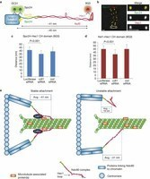 Dalla replicazione del DNA al cancro: con la stessa proteina | Med News | Scoop.it