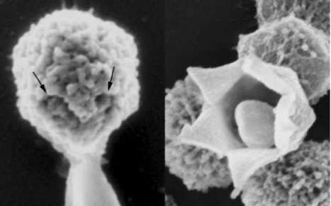 Three ways viruses have changed science for the better | Virology News | Scoop.it