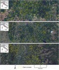 Detection of harvested forest areas in Italy using Landsat imagery | Remote Sensing News | Scoop.it