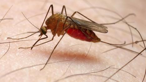 5 Stars: A Mosquito's Idea Of A Delicious Human : NPR | Insight and Understanding | Scoop.it