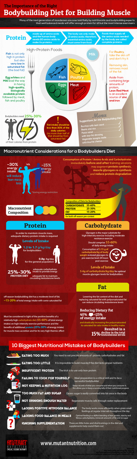 The Importance of The Right Bodybuilding Diet For Building Muscle   All I Need....   Scoop.it