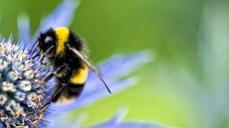 Do neonicotinoids harm organisms other than insects? - Science Omega | 100 Acre Wood | Scoop.it