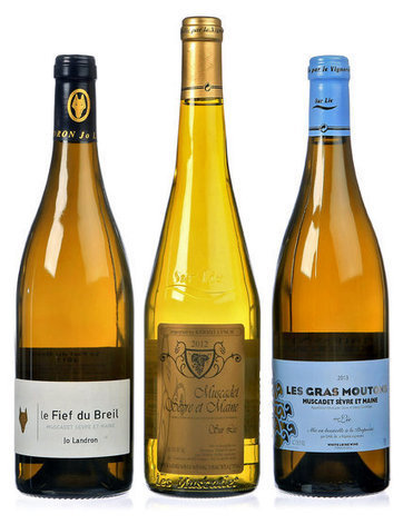 Experiencing the Evolution of Muscadet | Vitabella Wine Daily Gossip | Scoop.it
