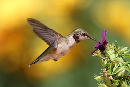How to Please Google in a Post-Hummingbird World | Content Strategy |Brand Development |Organic SEO | Scoop.it