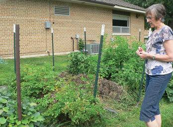 New trend in gardening gathering popularity in Chatfield - Bluff Country News - Spring Valley, Preston, Chatfield, Lanesboro, Harmony, Mabel, Spring Grove, Minnesota   Gardening   Scoop.it