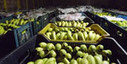 The best technology for keeping fruit, vegetables fresh longer | Health and Wellness | Scoop.it