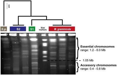PLoS Pathogens: The Accessory Genome as a Cradle for Adaptive Evolution in Pathogens (2012) | Plant Genomics | Scoop.it