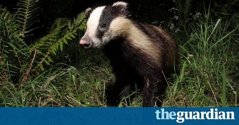 Of hungry badgers and hidden worms | Oceans and Wildlife | Scoop.it