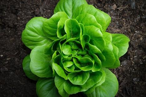 Les fermes urbaines, avenir de l'agriculture   Questions de développement ...   Scoop.it