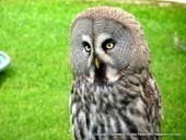 Beautiful Bewitching Owl - News - Bubblews   Helping  Domestic Animals And Wildlife   Scoop.it