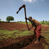 Uganda/Extreme Weather: Farmers concerned as heavy rain set to continue | Climate Change, Agriculture & Food Security | Scoop.it