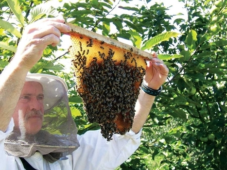 Keeping Bees Using the Top-bar Beekeeping Method | Modern-Day Homesteader | Scoop.it