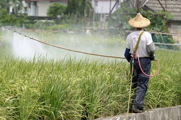 Les légumes chinois regorgent de pesticides et ils sont partout | Recherche d'actu Chine | Scoop.it