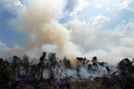 Erik Meijaard: Get Your Facts Right on Indonesia's Haze Problem | Jakarta Globe | Erba Volant - Applied Plant Science | Scoop.it