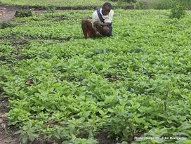 malnutrition | Radio Okapi | La Malnutrition | Scoop.it
