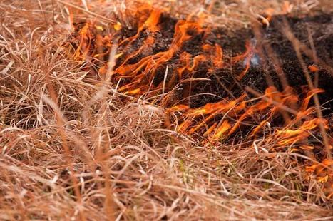 Study finds benefits to burning Flint Hills prairie in fall and winter | Sustain Our Earth | Scoop.it