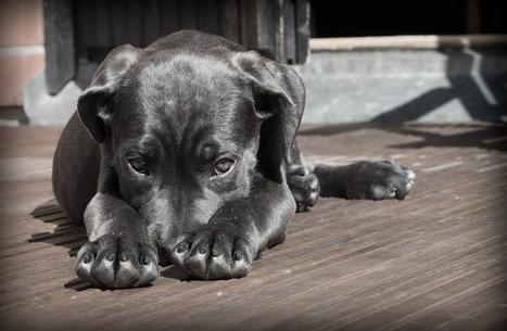 Bern, 24.10.2016 - Stärkere Überwachung Hundehandel | ʕ·͡ᴥ·ʔ Welpenkauf Informationen | Scoop.it