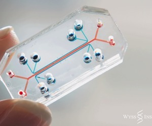 Lung-on-a-chip research could give us new ways to fight disease | The future of medicine and health | Scoop.it