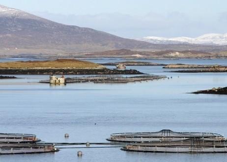 World Fishing - Commission calls for cooperation in aquaculture   Aquaculture (Global Aqua Link)   Scoop.it