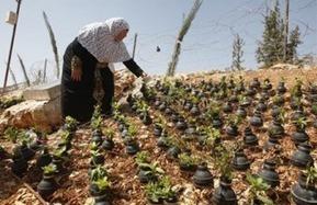 Garden of Tear Gas Grenades in Bil'in | Occupied Palestine | Scoop.it