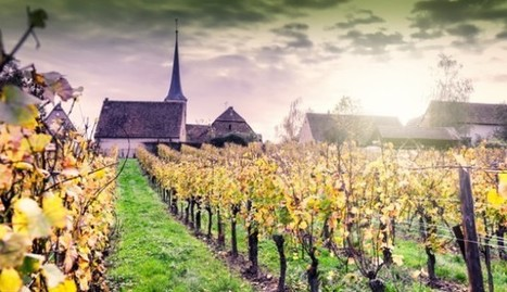 Famille Hugel...All about Alsace wines - grapes, oak, names and what makes them special | Vitabella Wine Daily Gossip | Scoop.it