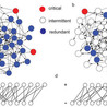 Dynamics on complex networks