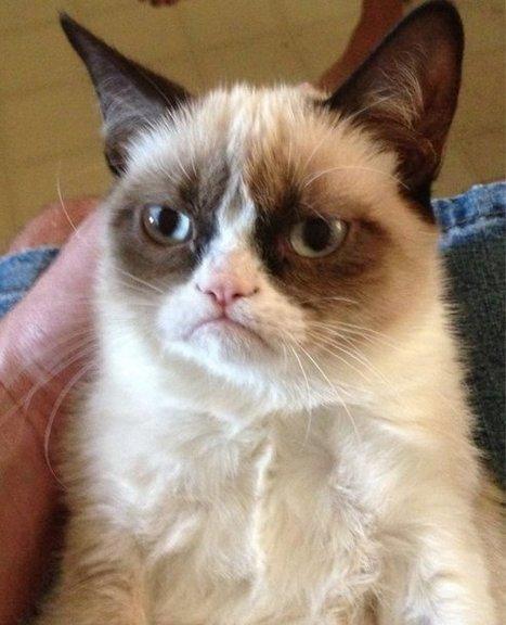 Blogs - CAT FRIDAY: Meet Tard, a perpetually grumpy cat   Feline Health and News - manhattancats.com   Scoop.it