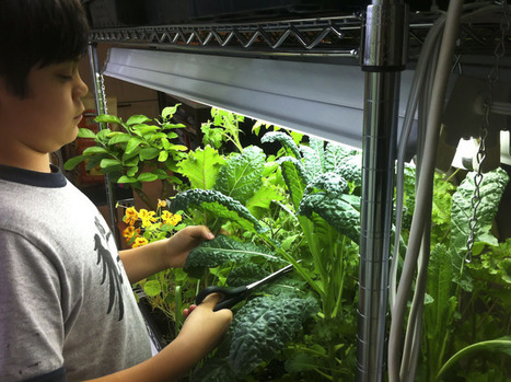 """""""Just winging it in the city"""" 