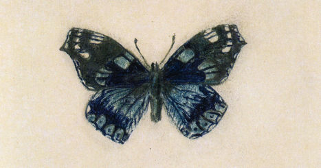 Vladimir Nabokov, Butterfly Illustrator - The New Yorker | Creatively Aging | Scoop.it