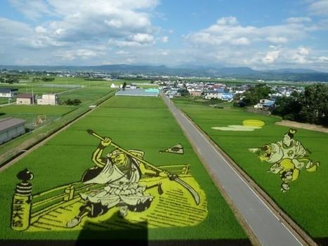 Des rizières japonaises au bon goût de land art - Egalité et Réconciliation | L'actualité sur le métier de fleuriste | Scoop.it