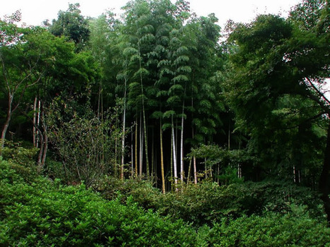 Bamboo forest,Japan | Wallpaper view | worlds beautiful place in world | Scoop.it