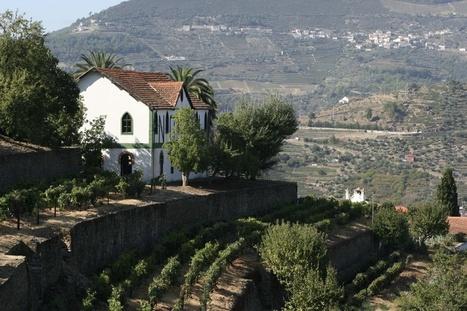 Noval Nacional 2011 Declaration | The Douro Index | Scoop.it