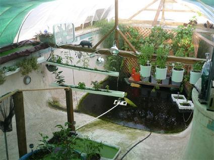 Picina convertido en un sistema de acuaponia.   acuaponia,sinergia de hidroponia y acuicultura   Scoop.it