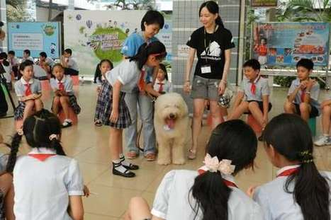 Animals Asia's Professor Paws Program Teaches Children in Guangzhou, China Compassion for Dogs | Animals R Us | Scoop.it