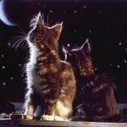 2 cats see a beautiful moon | 2 dogs are very happy | Scoop.it