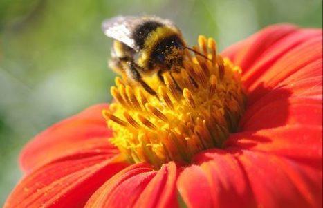 Pollens, abeilles et compagnie - Jardins de France | ECOLOGIE BIODIVERSITE PAYSAGE | Scoop.it