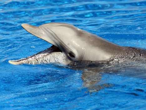 Nellie the dolphin dies at Marineland Dolphin Adventure; beloved JU mascot ... - Florida Times-Union | Mascots in the news | Scoop.it