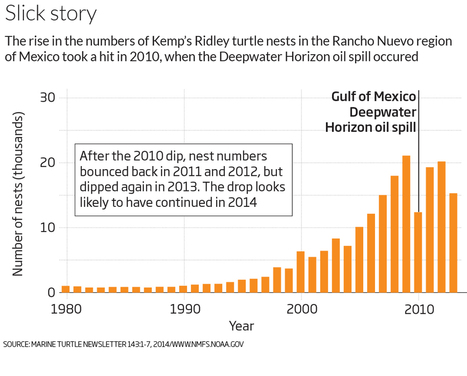 After the spill: Mystery of the vanishing Gulf of Mexico turtles - life - 17 April 2015 - New Scientist | All about water, the oceans, environmental issues | Scoop.it